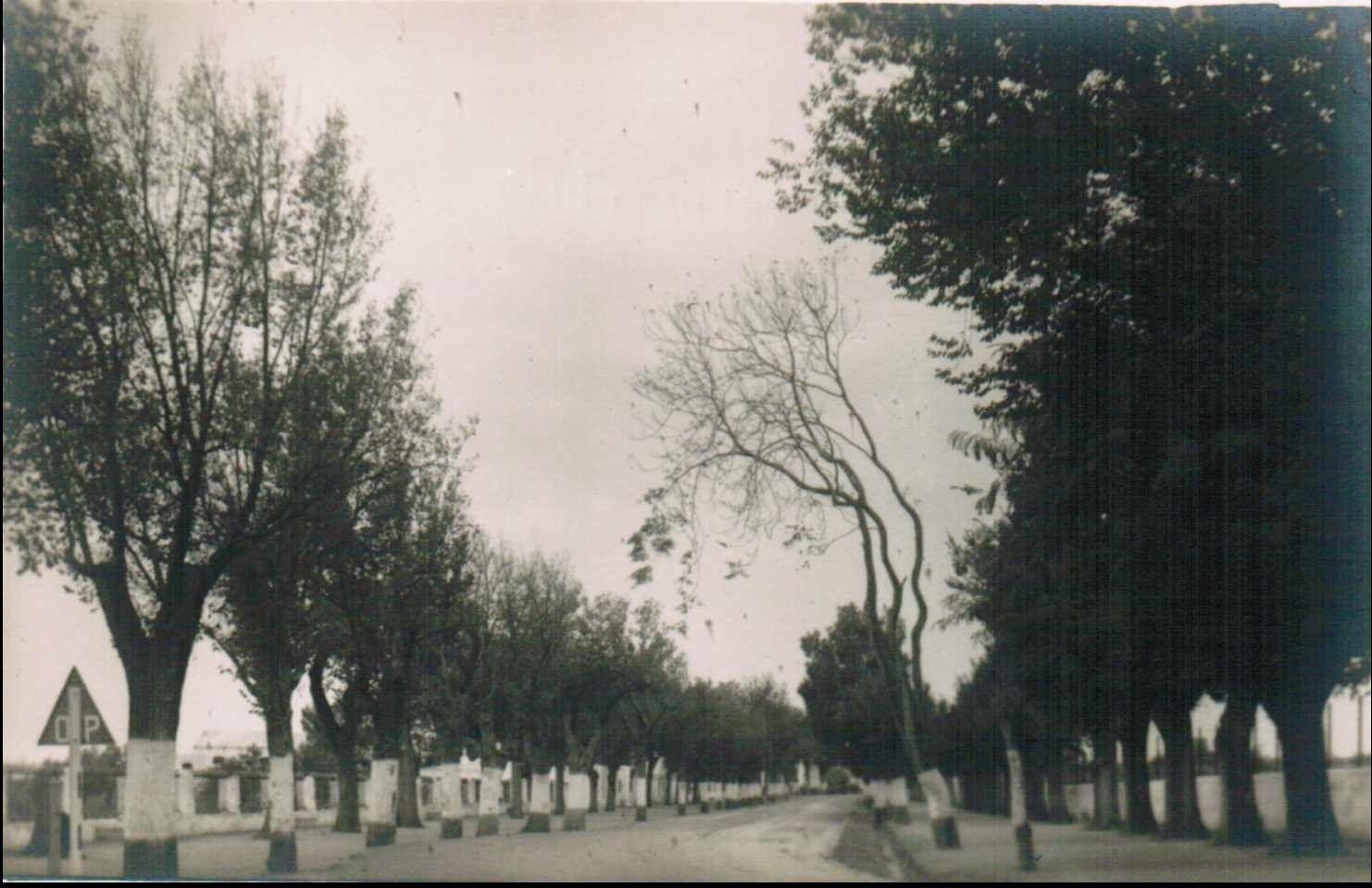 Alameda Solano